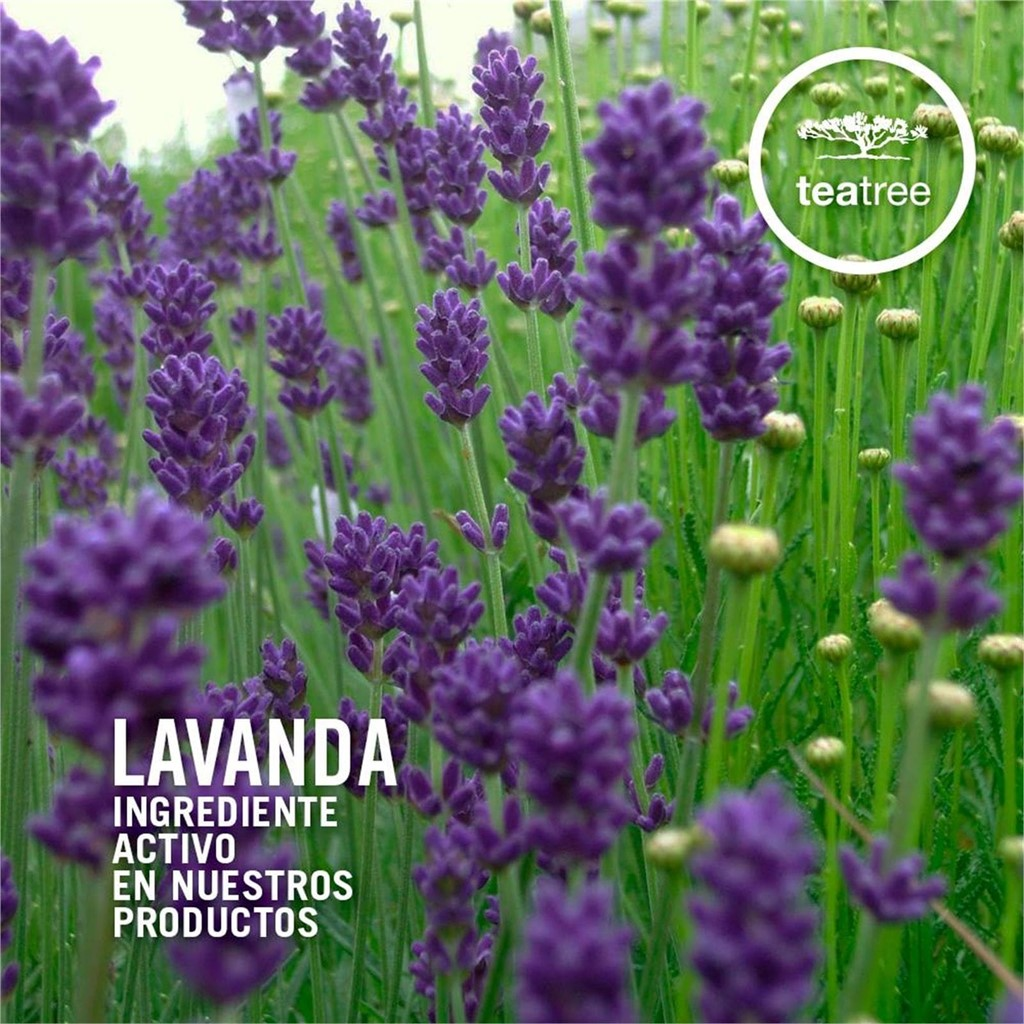 Foto 1 LAVANDER MINT MOISTURIZING CONDITIONER